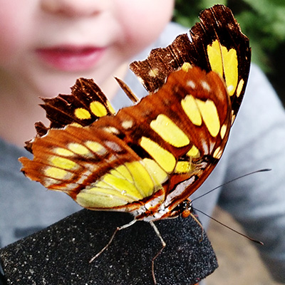 Image of child staring at butterfly